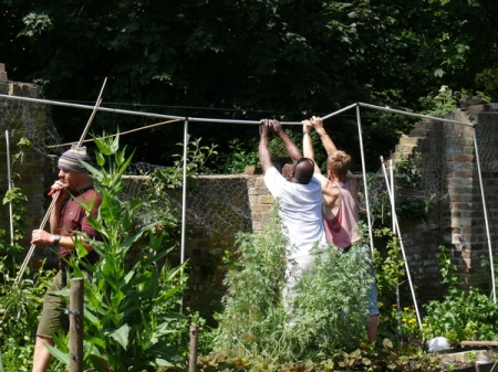 Building the fruit cage